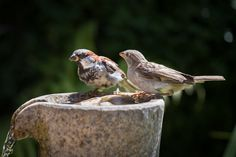 2Sparrows by Andreas  Krinke on 500px