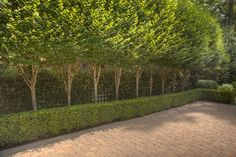 Columnar Hornbeam Design Ideas, Pictures, Remodel and Decor