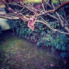 #foglia #red #leafes #green #garden #home #trees #siepe #winter #autumn #instawinter #life #death #novellaorchidea #novella #orchidea #raccontierotici #racconti #ebook #ricardo #tronconi #eroticnovel #staytuned #followme
