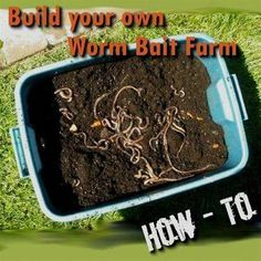 Worms are a great bait for catching fish but buying box after box can add up to a lot of wasted money. This will be a step by step easy to Fishing Fishing Worms, Gone Fishing, Fishing Bait, Best Fishing, Trout Fishing, Fishing Tips, Fishing Stuff, Fishing Knots, Fishing Tackle
