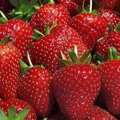 how to take care of everbearing raspberries