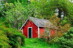 Image result for red shed