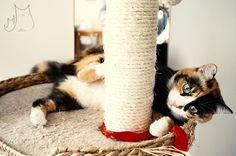 Świn #cat