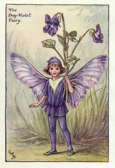 the dog violet fairy by Cicely Mary Barker