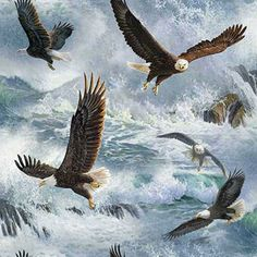 """Springs Creative Wild Wings Quest Of The Hunter Eagle Flight 44"""" wide Fabric by the Yard [Purchased 3yrds]"""