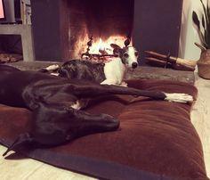 Two of the pack #sighthounds #greyhound & #whippet #oliviathegreyhound #xicathesmallwhippet