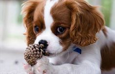 Eikels zijn giftig voor de hond | Gezelschapdierenkliniek Roosendaal