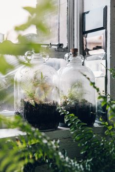 Plant-filled terrariums and other greenery at Clapton Tram.