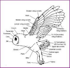 migratory bird diagram 1000+ images about birds on pinterest | nature study, bird ... hi bird 4 wheeler wiring diagram