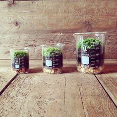 terrariums and soil layers