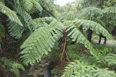 Pure vegetation in the Azores