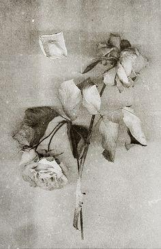 rose / estampe numérique