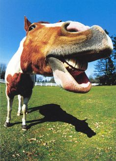 Funny Horse Pictures with Captions - Bing Images
