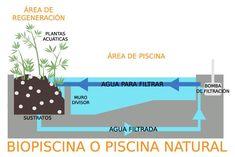 En nuestro mantenimiento de comunidades, vaciado o desatascos en piscinas de Castellón, os descubrimos qué son las piscinas naturales o ecológicas