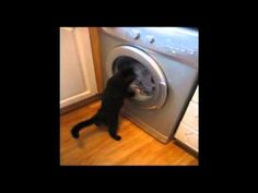 Cat vs Washing Machine - The Translation by Chris Cohen
