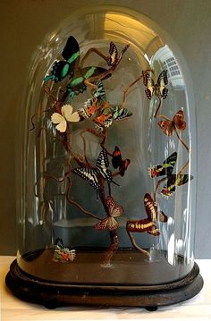 Création by Serge Miché Composition de Papillons. Glass Dome Display, Glass Domes, Cloche Decor, The Bell Jar, Bell Jars, Diy And Crafts, Arts And Crafts, Butterfly Art, Butterflies