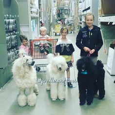My 2 most favorite things in life I would say are my kids and my poodles.  I never thought that I'd have a poodle. .. then 2 and soon to be 3! I may be done having kids but adding poodles to the mix has made my family grow! These are my 4 beautiful children with 2 of my beautiful poodles and one that we are puppy sitting.  I consider Willow my puppy niece though  because she is related to my handsome man. This was a fun trip with the whole family to Home Depot.  #poodlesofinstagram…