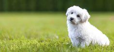 razas perros niños