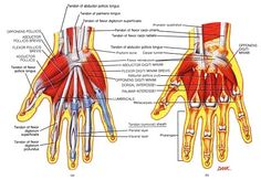 Carpal Tunnel Syndrome picture used from Principles of Anatomy and Physiology