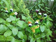 I found some frogs in my garden... 5/27/15.