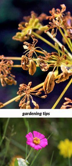 gardening tips_14_20180805155444_53 olive garden prices lunch womens cotton gardening vest home depot garden design ideas olive garden johnson city tn - Olive Garden Johnson City Tn