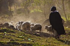 La pastora y sus ovejas, via Flickr.