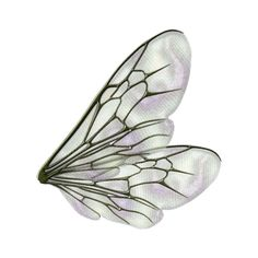 tubes ailes ❤ liked on Polyvore featuring wings, butterflies, fillers, backgrounds, fairies, effects, embellishment and details