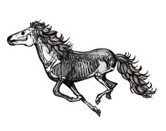 11 Best Horse Images On Pinterest