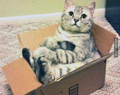 24 Gaya Duduk Kucing Yang Akan Membuat Kamu Tertawa Terbahak - Bahak