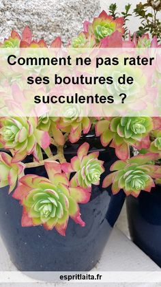 Divide the succulent Cuttings succulents Spirit river Lata House Plants, Planting Flowers, Flower Pots, Succulents, Garden Tags, Gardening Blog, Grass Textures, Cactus House Plants, Indoor Plants