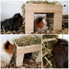 Solid pine, unpainted guinea pig and rabbit hay rack/tunnel. No nails or screws also no sharp edges so its very safe for your pet to use. Hours or fun and play. Perfect boredom breaker. This product was made by me but with a little help and advice from my totally small pet dedicated family members who have a lot of experience with rabbits and guinea pigs. As you can see on photos the pets enjoy to eat, play and hide in this product very much for hours and hours.  Product dimensions: Widt...