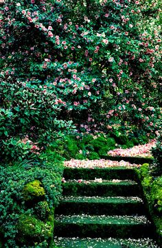 ~~What could be more magical than walking on a blossom covered?~~~ Petaled Stairway, Italy photo via charline