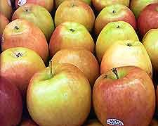 Winemaking Recipe for Apple Wine, How To Make Apple Wine Wine: Wine Making Guides
