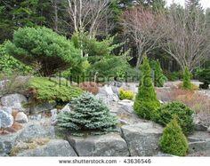conifer garden - Google Search
