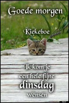 Goede morgen | German Quotes, Dutch Quotes, Good Afternoon, Good Morning, Happy Animals, Animals And Pets, Tuesday Greetings, Bon Mardi, Morning Greeting