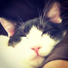 腕枕を所望 - @makoccchan- #webstagram