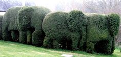 elephant topiary  cute garden ideas - Google Search  distorarchitecture.com