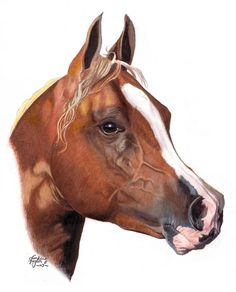 ok so this is drawn with coloured pencils and I used white acrylics to add some highlights and mane hairs to keep it crisp looking.. again this is drawn from a photograph taken by Olga it's on her ...