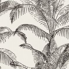 This Pandore Palm Leaves Wallpaper features a large scale palm leaf pattern in solid black set on a white matte background with a fabric effect finish Seagrass Wallpaper, Palm Leaf Wallpaper, Feature Wallpaper, Tropical Wallpaper, Number Wallpaper, Wallpaper Roll, Wall Wallpaper, Pattern Wallpaper, Wallpaper Sydney