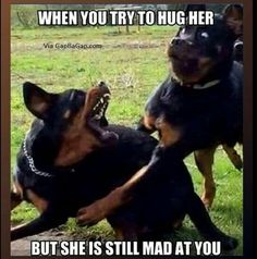 Funny Animal Pictures Of The Day 23 Pics - Funny Animal Quotes - - Funny Animal Pictures Of The Day 23 Pics The post Funny Animal Pictures Of The Day 23 Pics appeared first on Gag Dad. Cute Animal Memes, Funny Animal Quotes, Animal Jokes, Cute Funny Animals, Cute Baby Animals, Funny Cute, Dog Quotes, Animal Captions, Super Funny