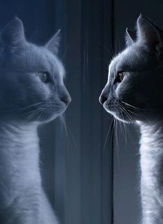my alter ego  | Tumblr #cats