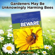 "New report from Friends of the Earth U.S. Did you know that many of the ""bee-friendly"" plants sold at many garden stores contain pesticides that actually harm and kill bees? See more: http://gmoinside.org/gardens-unknowingly-causing-harm-bees #savethebees #bees #saveourpollinators #neonics #contamination #food"