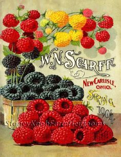 Scarff Berries Spring 1904 Seed Catalog. A Counted CROSS STITCH Art Pattern. There are different color hues within the pattern which when included result in greater dimensional depth to the overall finished piece when you step back. | eBay!