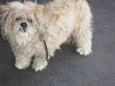 This DOG-ID#A1481553  I am a spayed female, white Poodle - Miniature mix.  The shelter thinks I am about 8 years old. I weigh approximately 13 pounds.  I have been at the shelter since May 29, 2014. South Los Angeles Animal Care and Control Center at (888) 452-7381 Ask for information about animal ID number A1481553