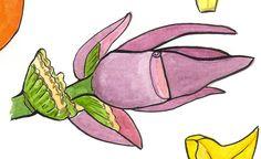 banana flower illustration