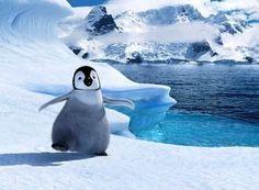 Penguin Pup