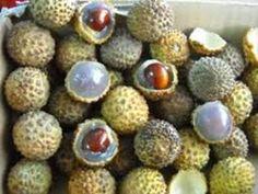 Lhau Fruit East Kalimantan