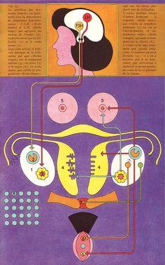 Female reproductive system.  Retro anatomy art