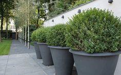 box balls in planters.