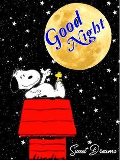 Good Night Cat, Good Night Qoutes, Cute Good Night, Good Night Friends, Good Night Messages, Good Night Wishes, Good Night Moon, Good Night Image, Snoopy Images